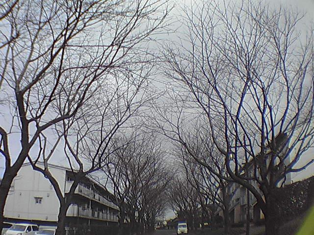 魚眼な冬景色