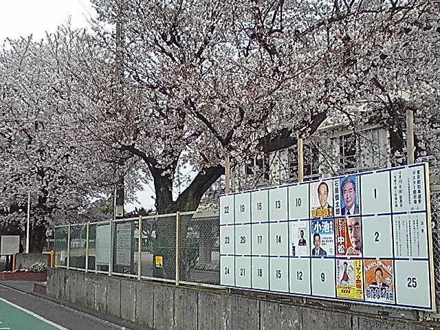 4月10日東京都知事選挙 桜も満開!
